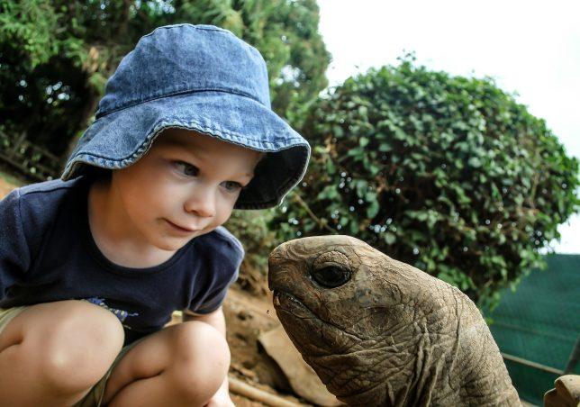 Boy watching tortoise